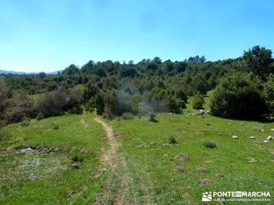 Valle de la Pizarra y los Brajales - Cebreros; senderismo burgos robregordo tejo arbol